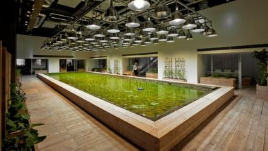 Photo of More than work: Tokyo office grows own food in Office