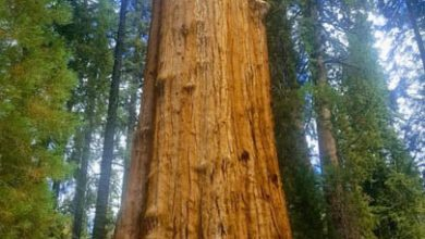 Photo of 5 life lessons from The Giant Sequoias