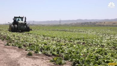 Photo of Why Farmers Are Destroying Millions Of Pounds Of Food