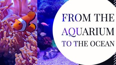 Photo of Organizations are not like aquariums