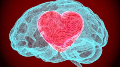 Photo of Neuroscience: why your heart might actually be able to rule your head effectively